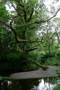 Irlandurlaub 2007