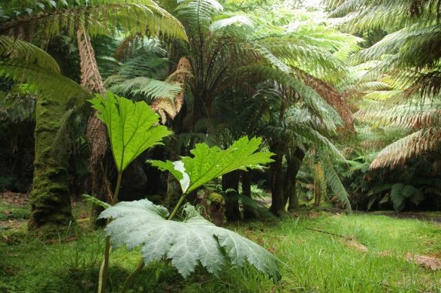 Derreen Garden.2