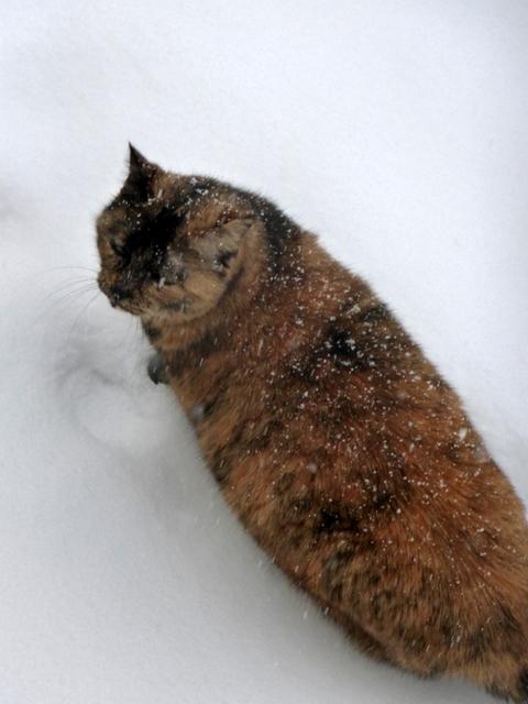 sie liebt den Schnee