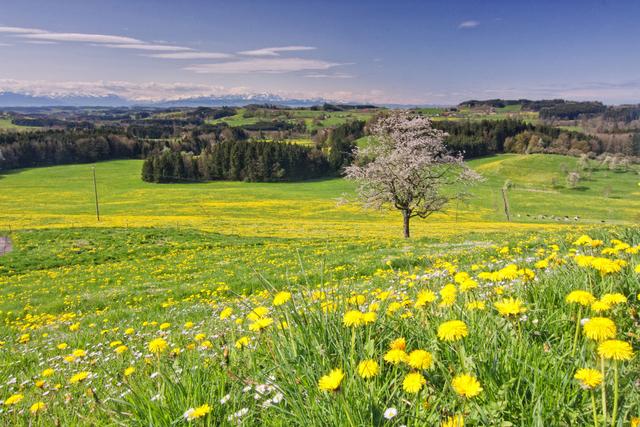 landschaft_oberschwaben_mit_alpen_01